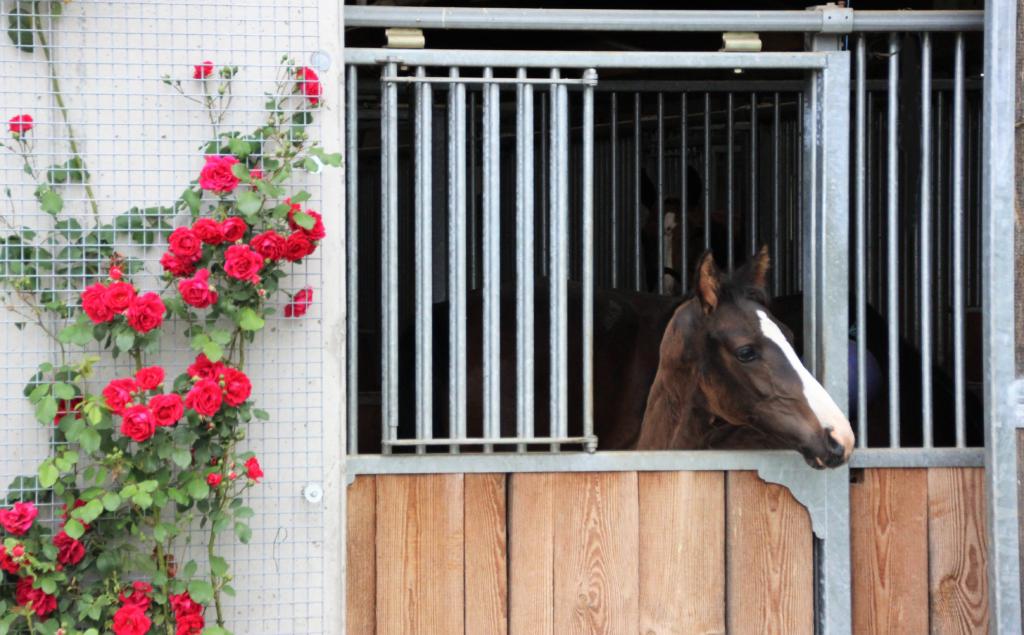 pferdezucht_vet-stables